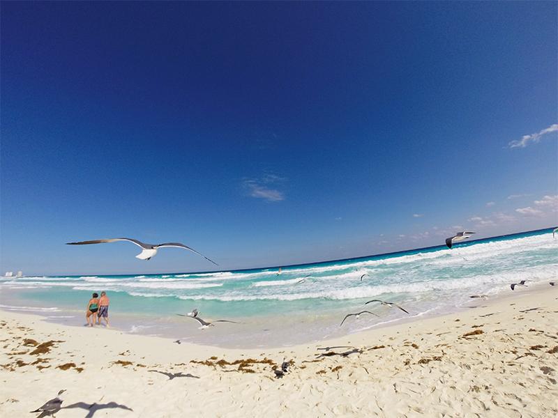 Канкун. Чайки на пляже Марлин