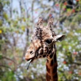 Зоопарк Мехико